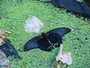 20060902blog_4_1