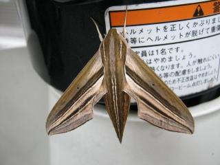 20110818blog3
